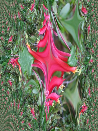 Wild fuchsia fractal