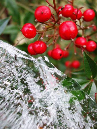 Berries and ice Stock Photo
