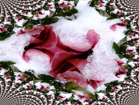Camelia in the snow - fractal