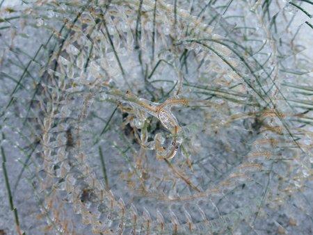 Icy grass illusion