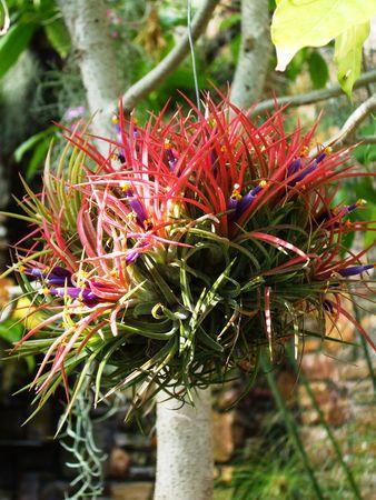 anaerobic: Anaerobic plant