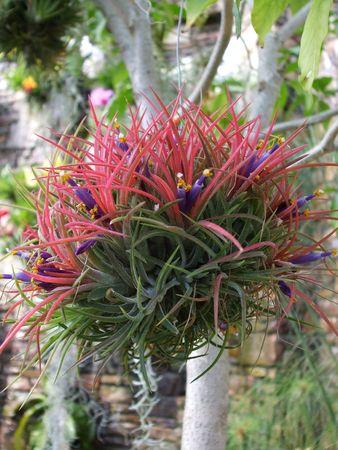 Anaerobic plant