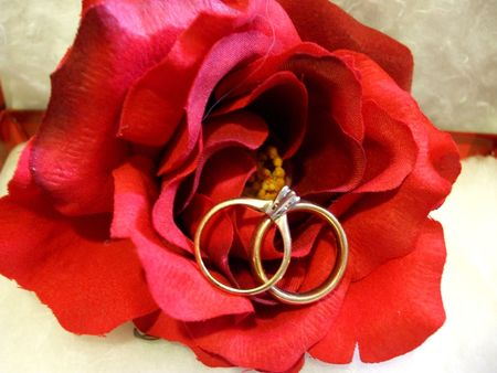 Rose with wedding rings Stock Photo