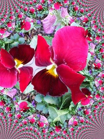 Rode viooltje - fractal Stock Illustratie