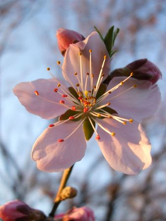 Dogwood blossom Stock Photo - 2685177