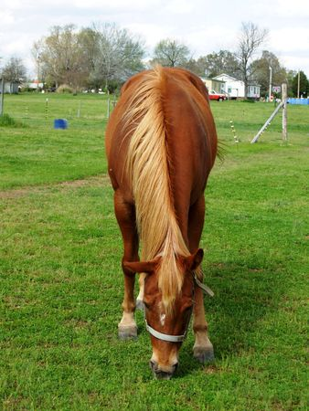 molly: Molly the brown horse