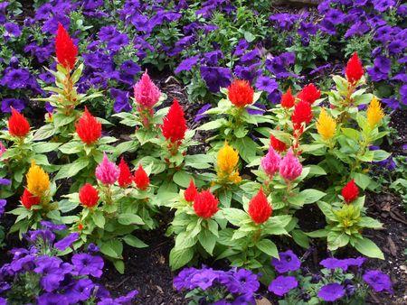 Exotische bloemen omringd door paarse petunia's