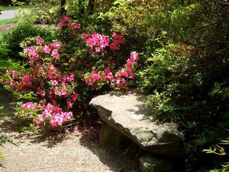 Pink azalea and a stone bench photo