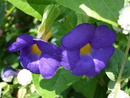 푸른 morgning 영광 꽃 스톡 콘텐츠
