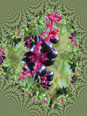 Berries after the rain - fractal map