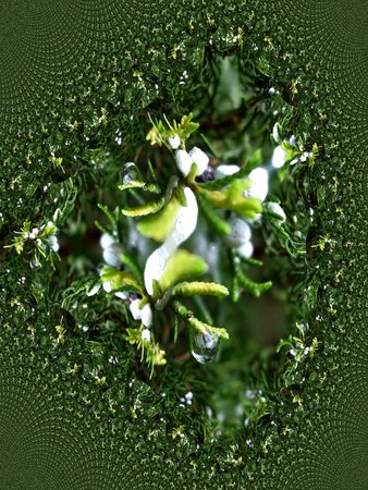 Tuja branch with berries after rain - fractal map