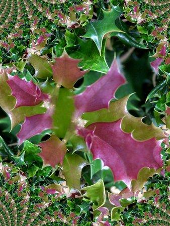 Hulstbladeren - fractal Stock Illustratie