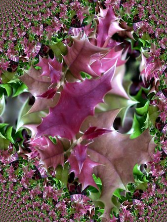 Holly leaves - fractal