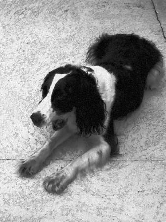 Black and white dog - pencil sketch illustration