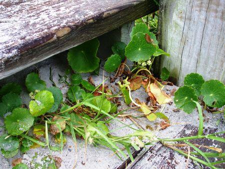 Plantas que crecen en la arena  Foto de archivo - 3620694