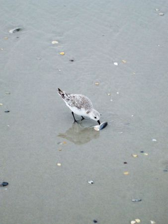 seabird: Small seabird eating a fish