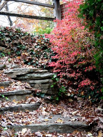 burning bush: Rock steps and a burning bush