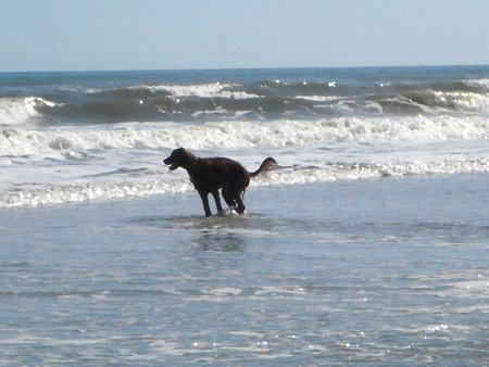 Irish setter playing in the surf - oil painting map on a photo