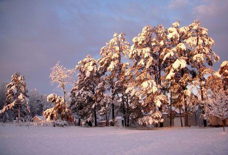 winter sunrise: Winter landscape at sunrise Stock Photo