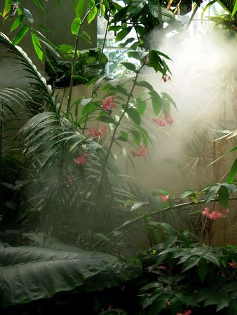 Tropical plants under water mist