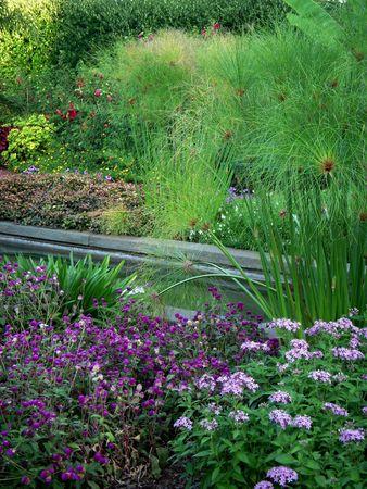 Diverse planten en struiken in de buurt van een kunstmatige beek