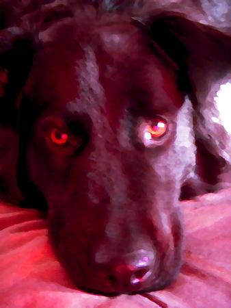 Big attent hond - olieverfschilderij kaart
