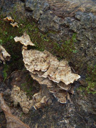 Fungus on a tree stump