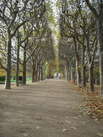 Tree-lined alley photo