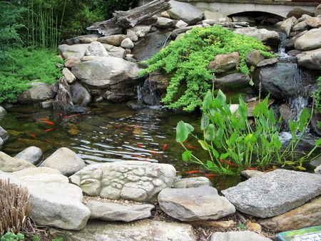 basin: Koi pond
