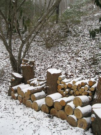 Firewood in the snow