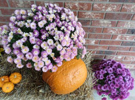 Pumpkins and mums