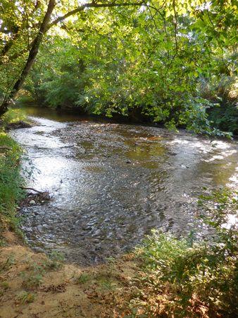 brooklet: Creek in the woods