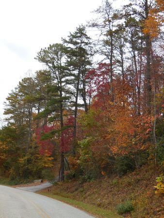 autumn road: Autumn road