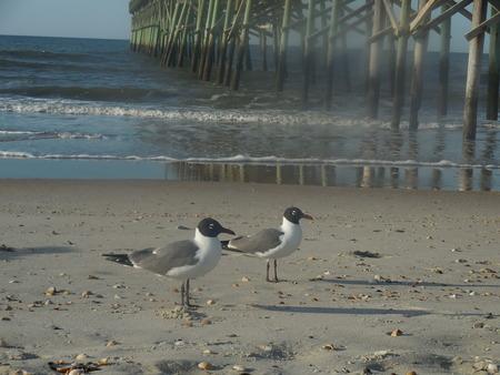 the seagulls: Seagulls on the beach