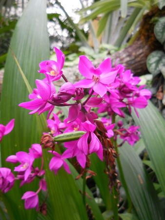Pink orchids Stock Photo - 88603388