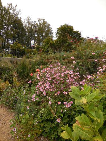 Flower garden Stock Photo - 88603403