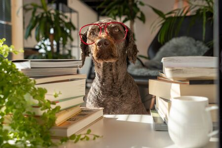 A dog wearing red glasses between a pile of books inside an apartment with many plants during sunset Imagens