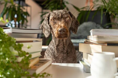 A dog between a pile of books inside an apartment with many plants at sunset