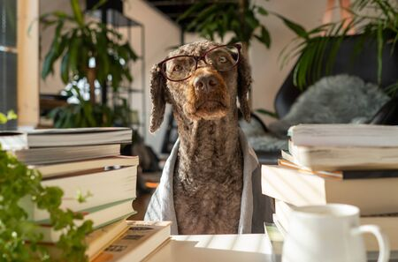 A dog wearing glasses and a robe between a pile of books inside an apartment with many plants during sunrise