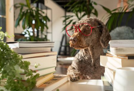 A dog wearing red glasses between a pile of books with the paw on the table inside an apartment with many plants during sunset
