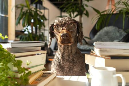 A dog wearing glasses between a pile of books inside an apartment with many plants during sunrise Imagens