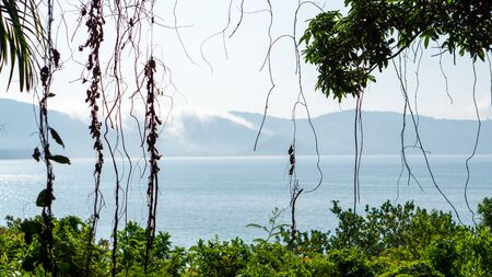 View of a quiet beach behind a frame of trees, leaves and lianas. A secret beach in Myanmar with no access by car