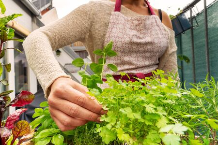 Caucasian woman picking up some aromatic herbs from her garden at the balcony