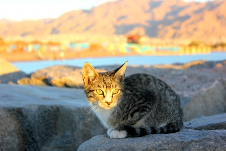 Cat sitting on a stone  Stock Photo
