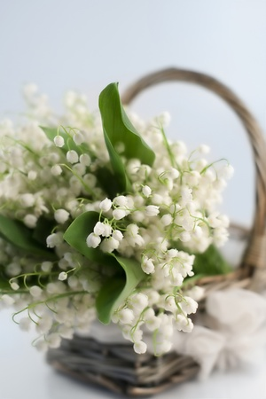 lily of the valley: Basket with lilies of the valley  Stock Photo
