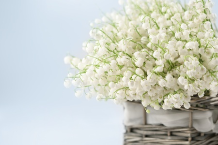 Basket with lilies of the valley  Stock Photo - 9764653