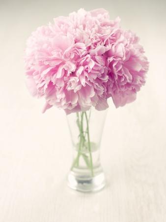 Vase of beautiful peony flowers on wooden background Stock Photo