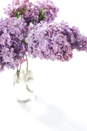 Bouquet of violet lilac in a vase on white background Stock Photo - 9764810