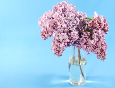 Bouquet of violet lilac in a vase on blue background photo