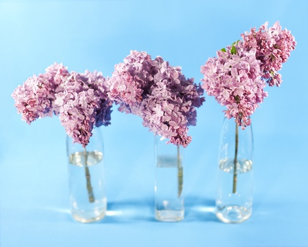 Bouquet of violet lilac in a vases on blue background photo